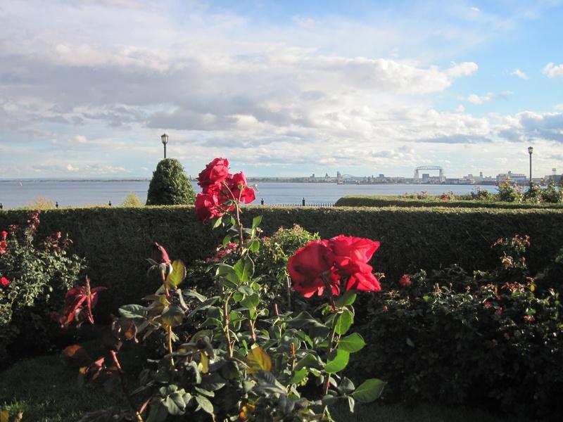 Leif Erikson Rose Garden 1